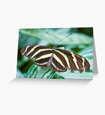 Black and yellow butterfly Greeting Card