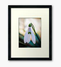 Single Snowdrop flower Framed Print