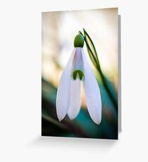 Single Snowdrop flower Greeting Card