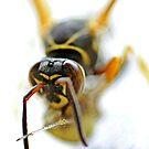 Wasp by lumiwa