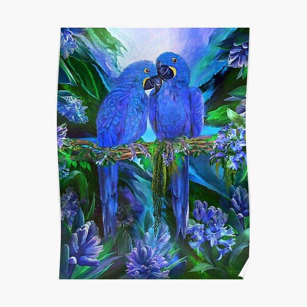 Tropic Spirits - Hyacinth Macaw Poster