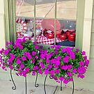 shop window by Tracey Hampton