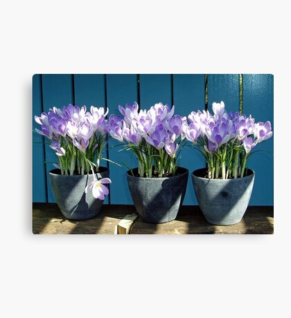 Spring-flowers in a flowerpot Canvas Print