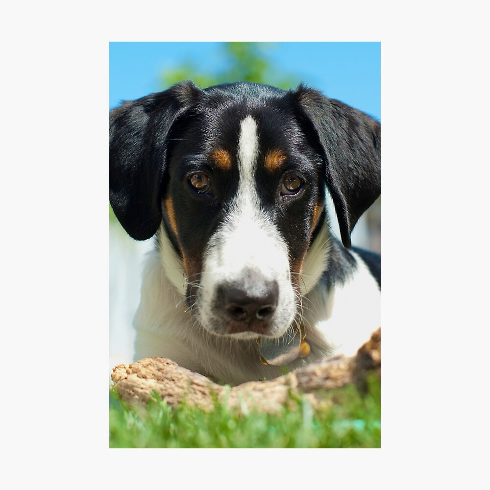 Dog stare Photographic Print
