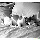 Jack in the bed by Dave Riganelli