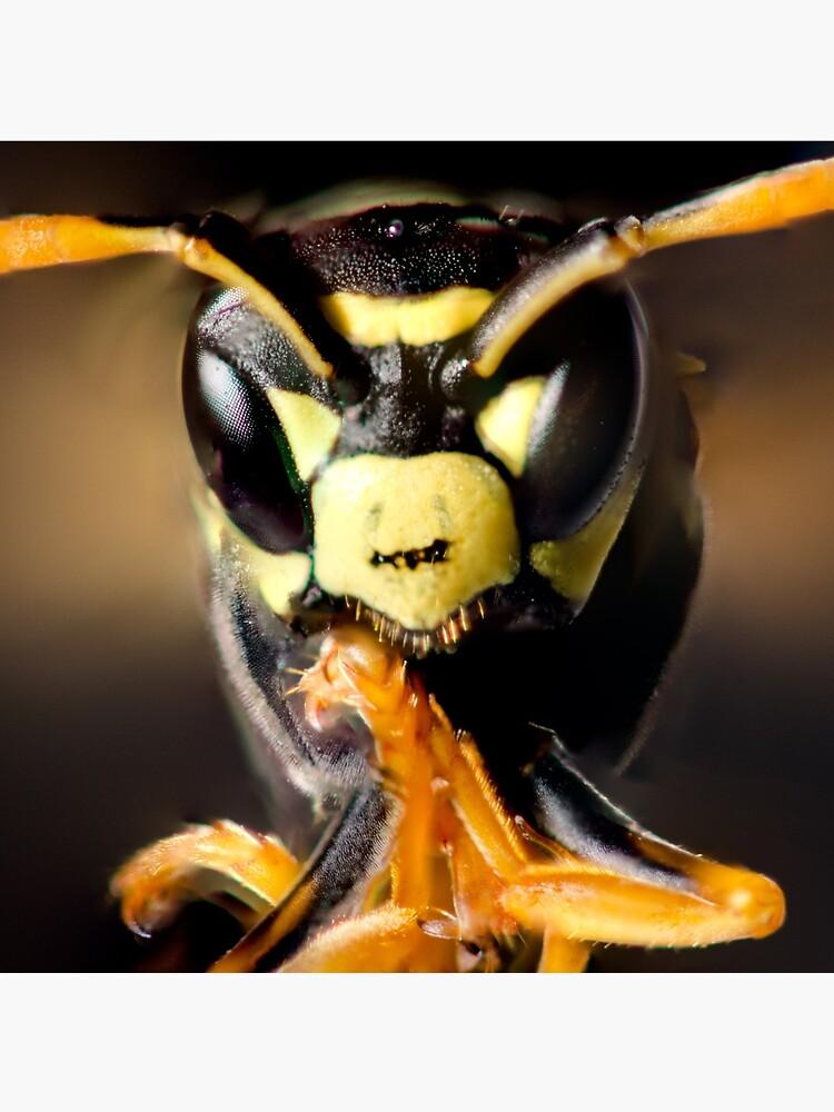 Wasp by daveriganelli