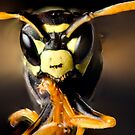 Wasp by Dave Riganelli