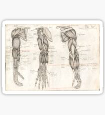 Human Anatomy 4 Sticker