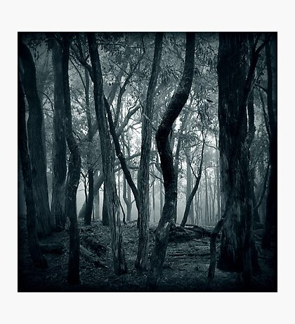 Lost Within Photographic Print