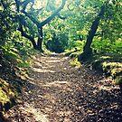Fantasy Woods by FreyaCariad97