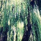 willow tree by FreyaCariad97