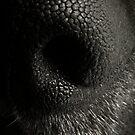 dusty's nose by FreyaCariad97