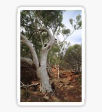 Old Gum Tree Sticker