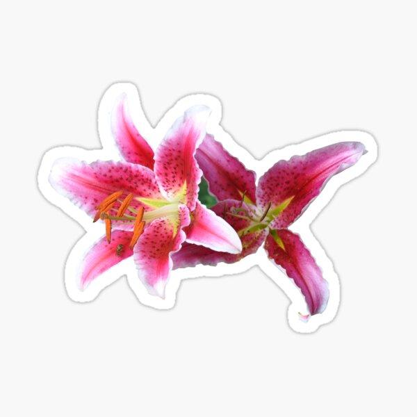 Stargazer lilies duo Sticker