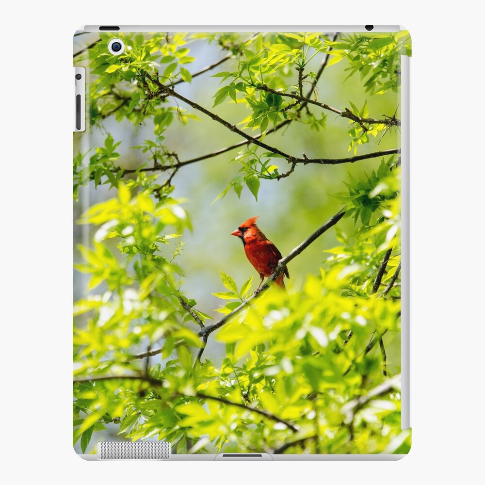Robin in tree iPad Case & Skin