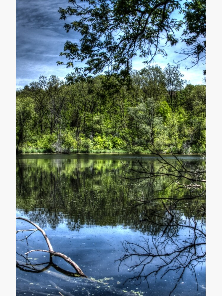 Reflected trees by daveriganelli