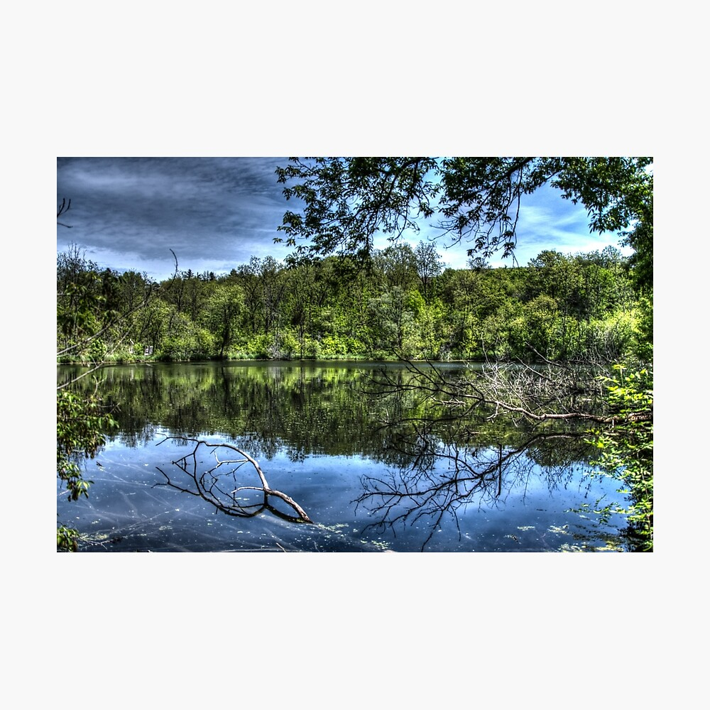 Reflected trees Photographic Print