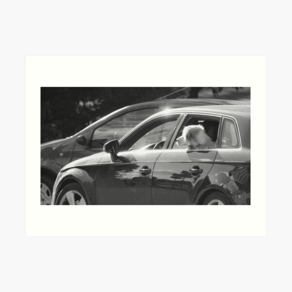 Dog Riding A Car Art Print