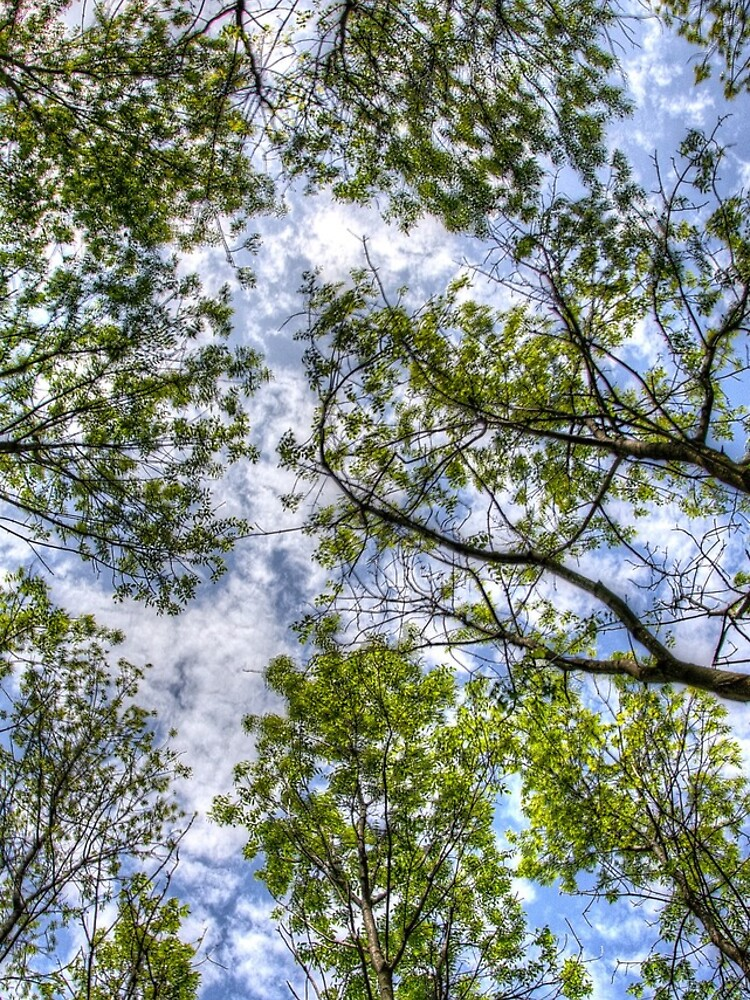 Trees in the sky by daveriganelli