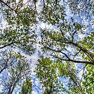 Trees in the sky by Dave Riganelli