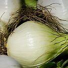 Onion Closeup by Mary Carol Story