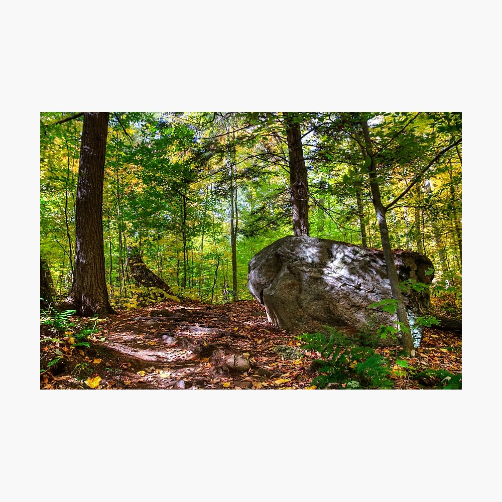 Boulder in the woods Photographic Print