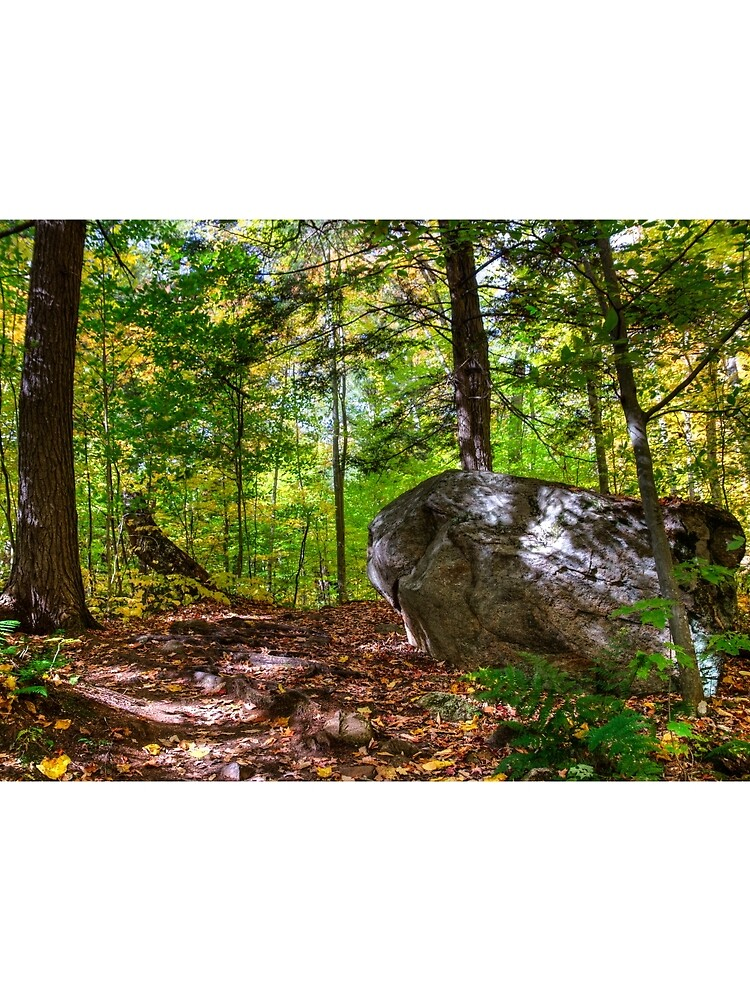 Boulder in the woods by daveriganelli