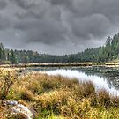Clouds over the wetlands by Dave Riganelli