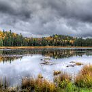Overcast day over the pond by Dave Riganelli