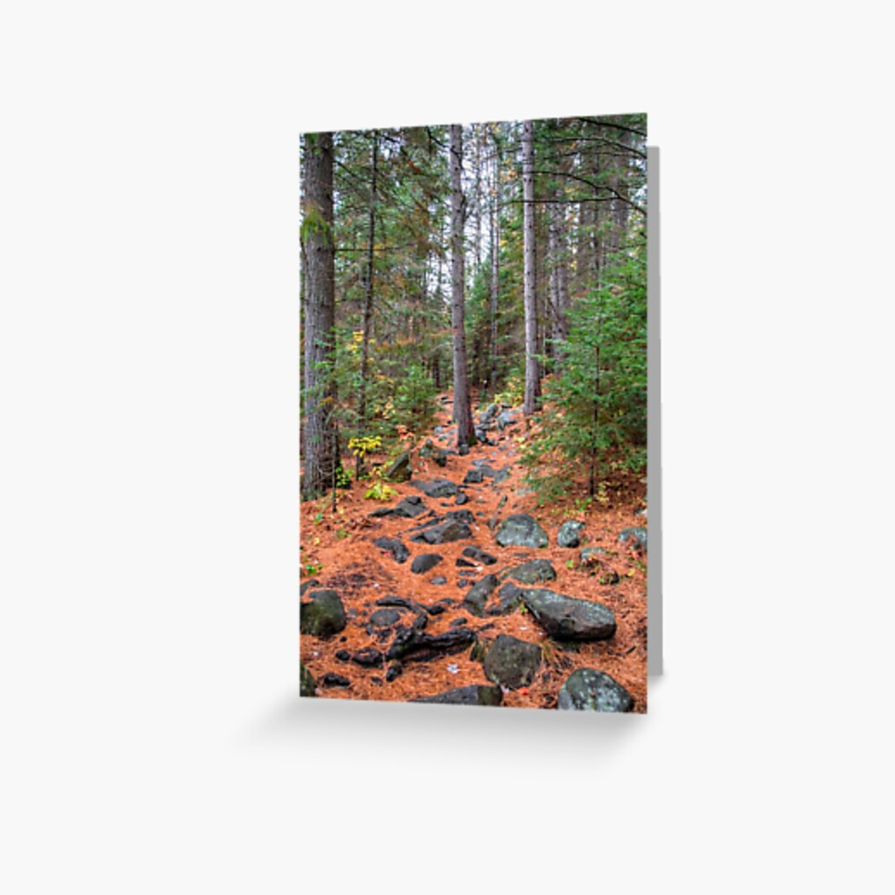 Rocky path through the pine forest Greeting Card