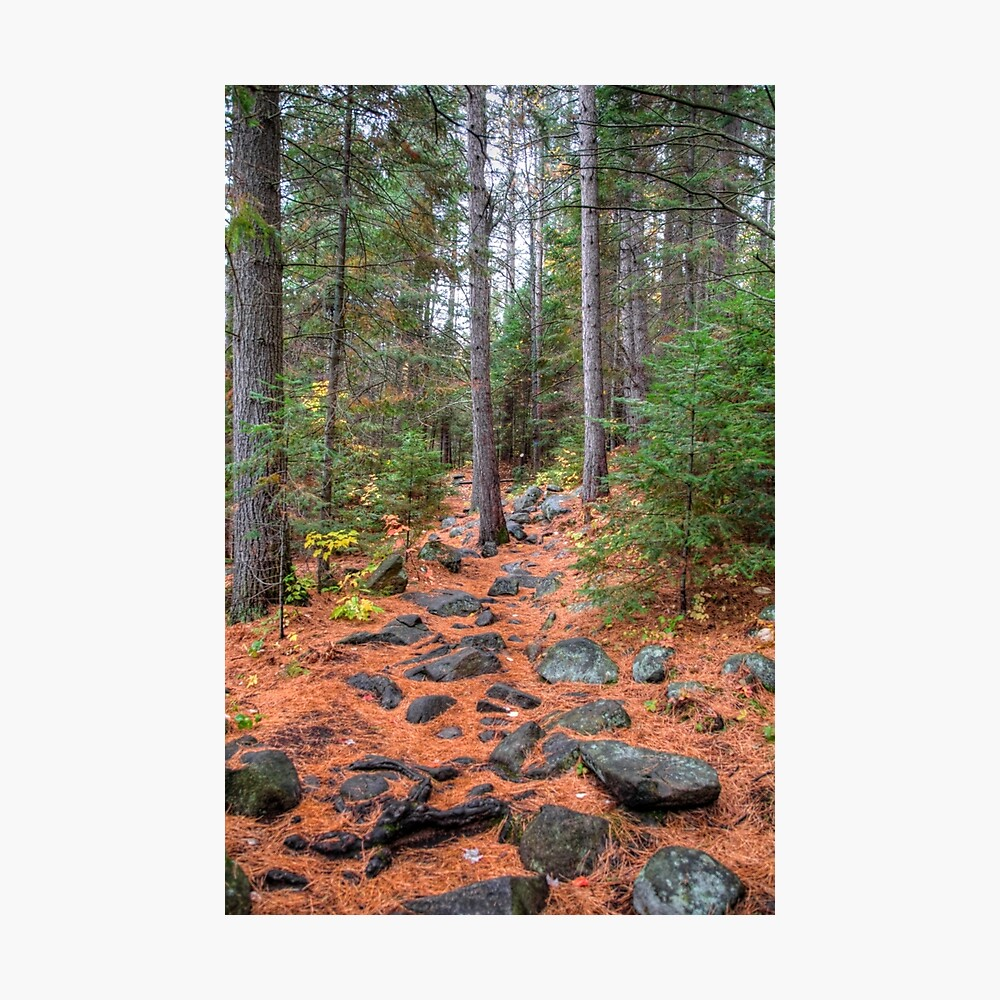 Rocky path through the pine forest Photographic Print
