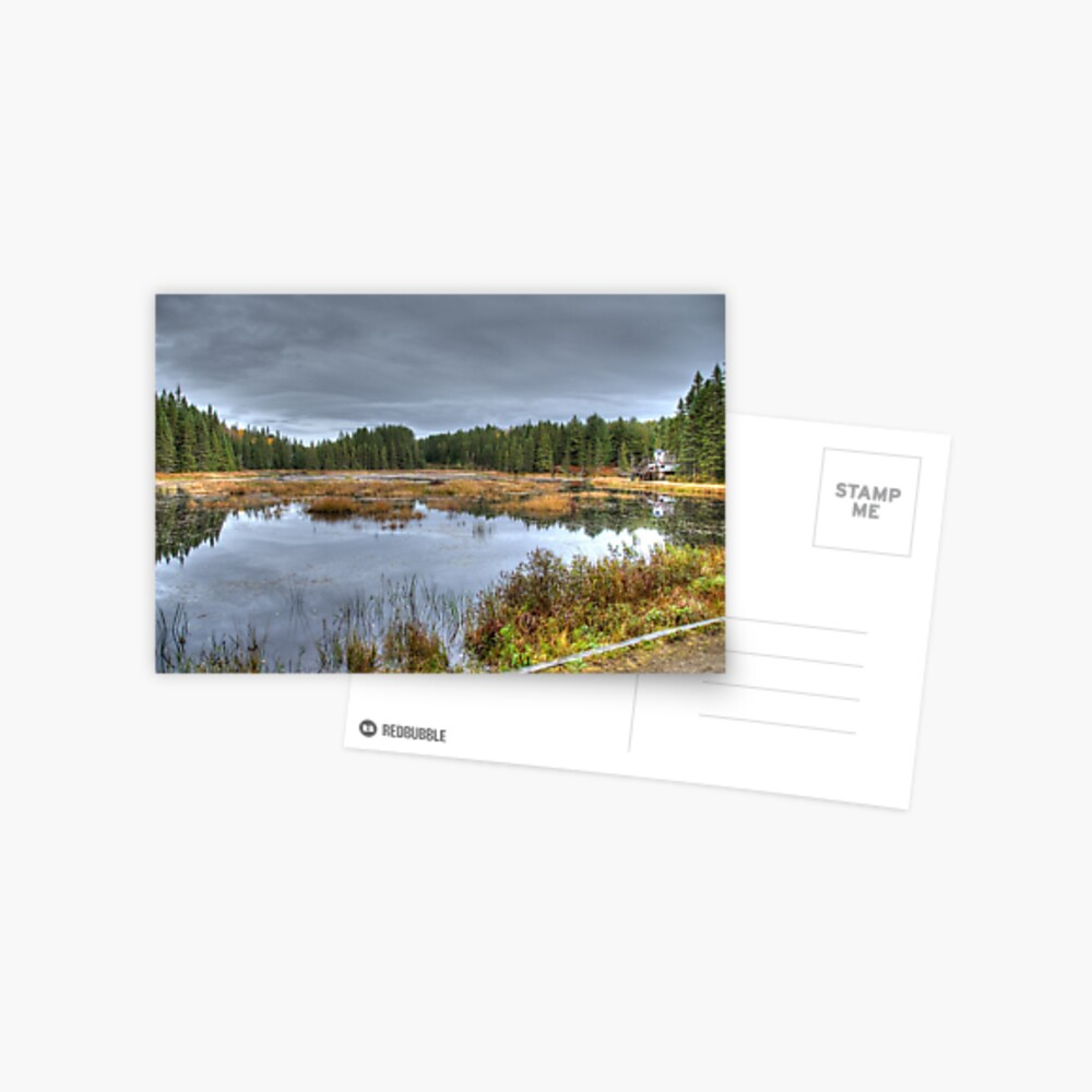 Wetlands Postcard