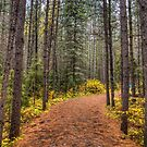 Path between the pines by Dave Riganelli