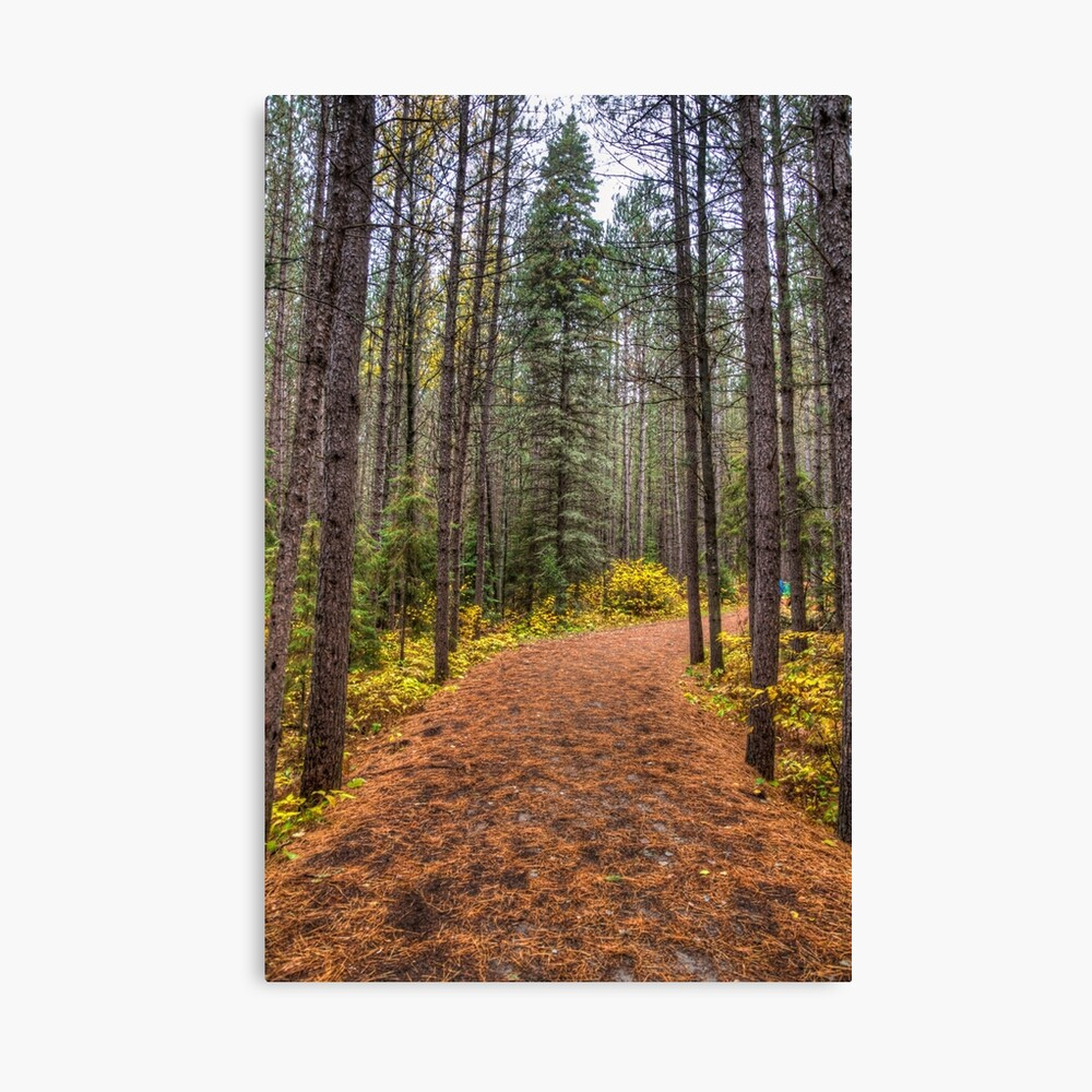 Path between the pines Canvas Print
