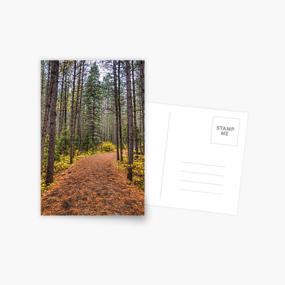 Path between the pines Postcard