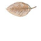 Gum Leaf 4 by Bill  Russo