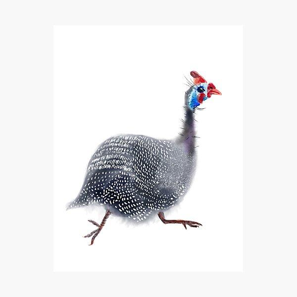 Guinea fowl 4 Photographic Print