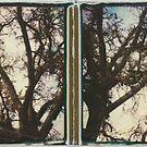 them big oak trees by Jill Auville