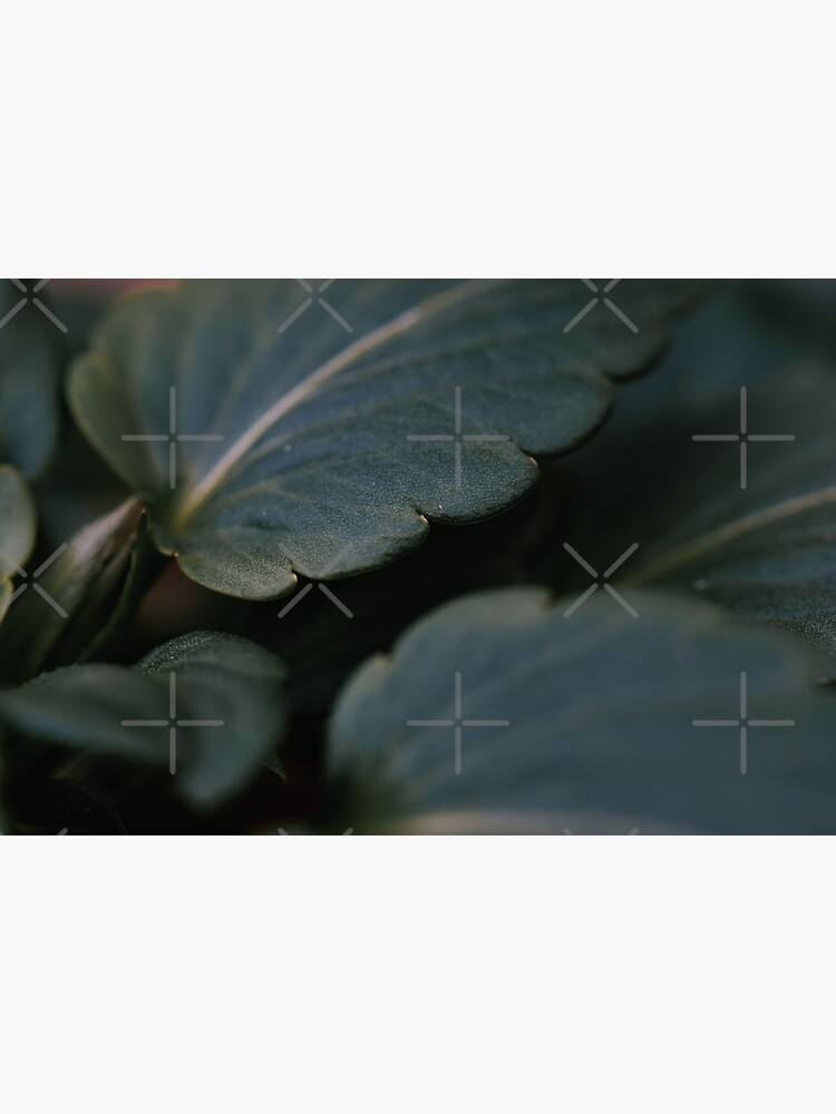 Thick Leaf by didssph-prints