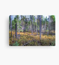 Pine trees in the marsh Canvas Print