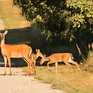 Doe With Two Fawns by Deb Fedeler