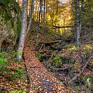 Walkway through the woods by Dave Riganelli