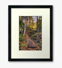 Walkway through the woods Framed Print