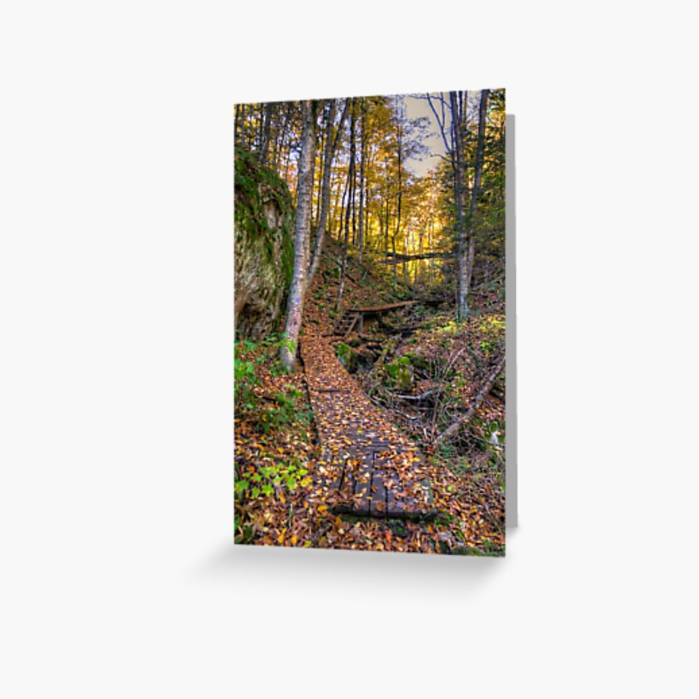Walkway through the woods Greeting Card