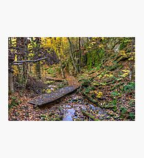 Forest walkway Photographic Print