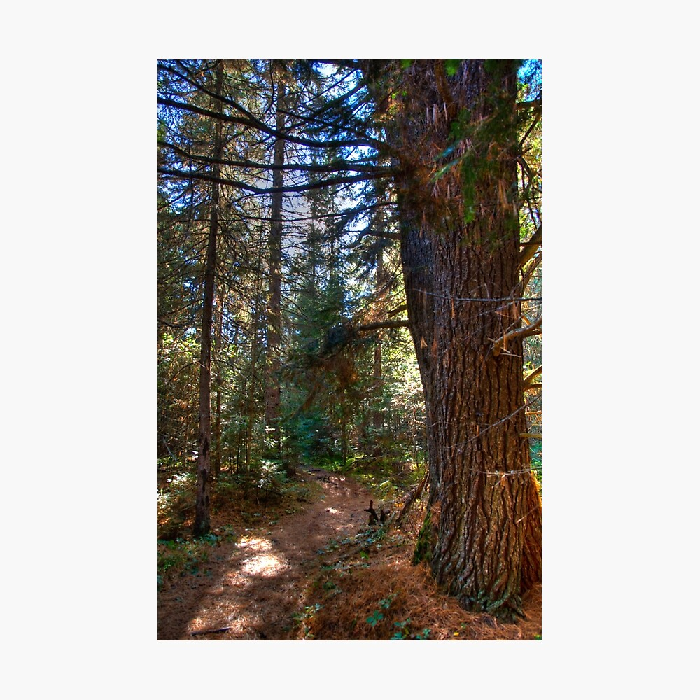Big pine Photographic Print