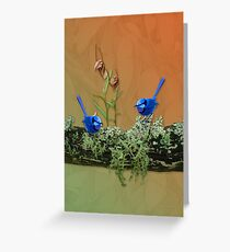 Blue Wrens & Winter Orchids Western Australia Greeting Card