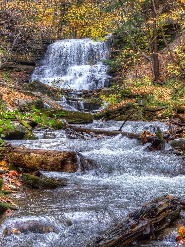 Forest waterfall by daveriganelli