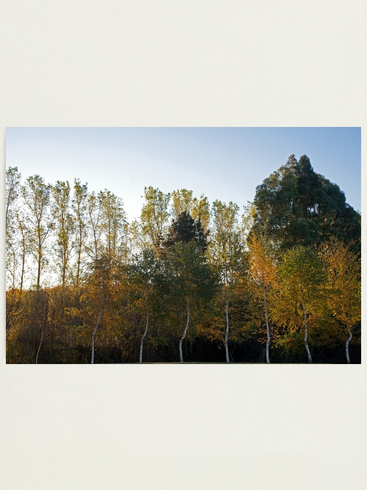 Alternate view of Autumn Trees at Fonti's Pool in Western Australia. Photographic Print