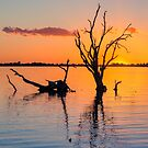 Sunset Silhouette   V by Ray Warren